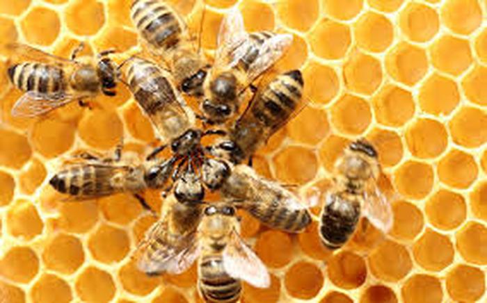 L'extraordinaire intelligence des abeilles