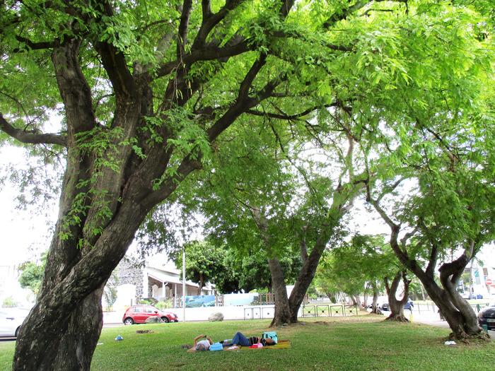 Journées du patrimoine 2018 - « L'inventaire des arbres remarquables de La Réunion : Balade-photo autour des arbres du centre-ville du Port»