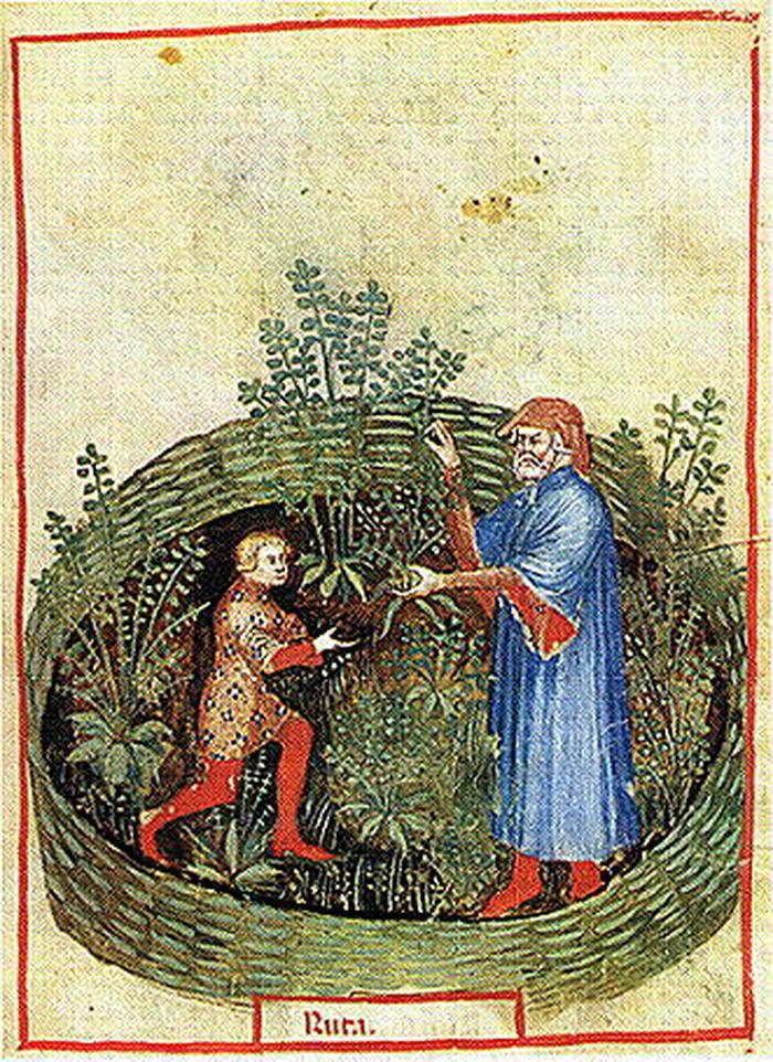 Journées du patrimoine 2018 - L'usage des plantes médicinales et comestibles au Moyen Âge.