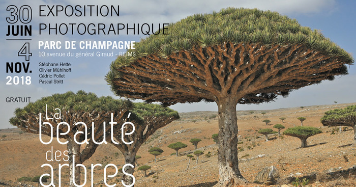Journées du patrimoine 2018 - La beauté des arbres