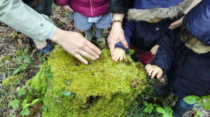 La forêt des tout-petits