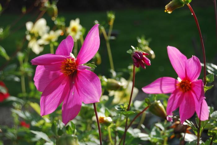 Crédits image : Jardins botaniques de Nancy