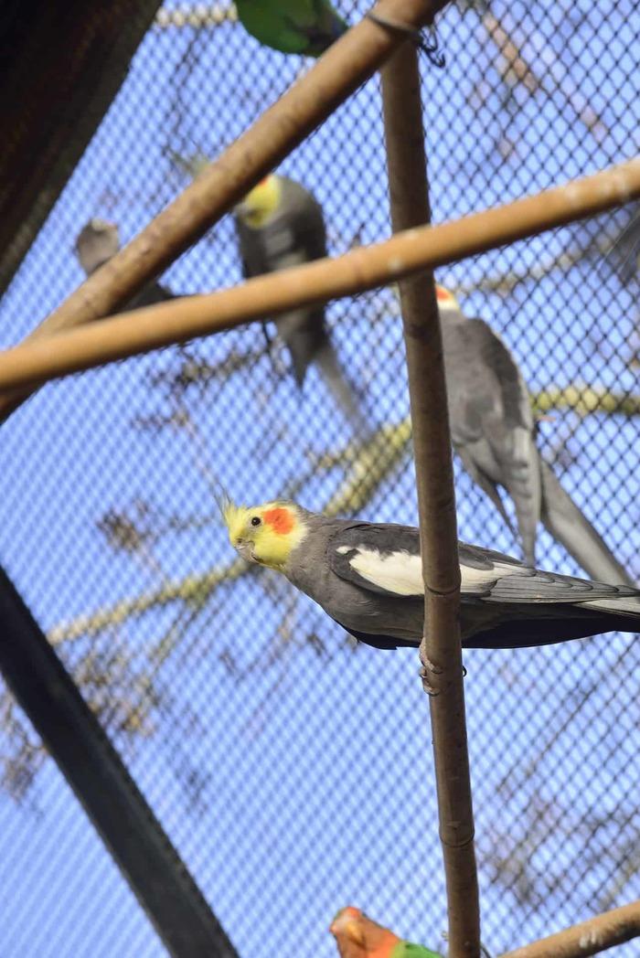 Le Jardin des oiseaux