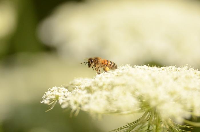 Le périple du pollen
