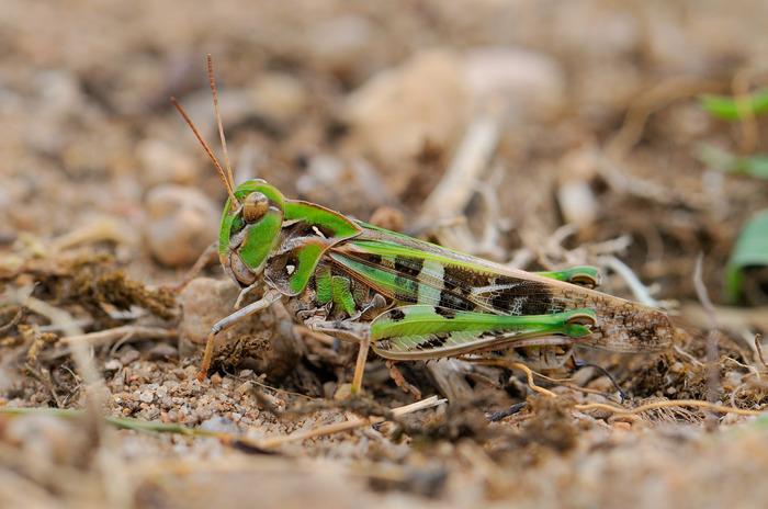 Journées du patrimoine 2018 - Le petit peuple de l'herbe et des rocailles