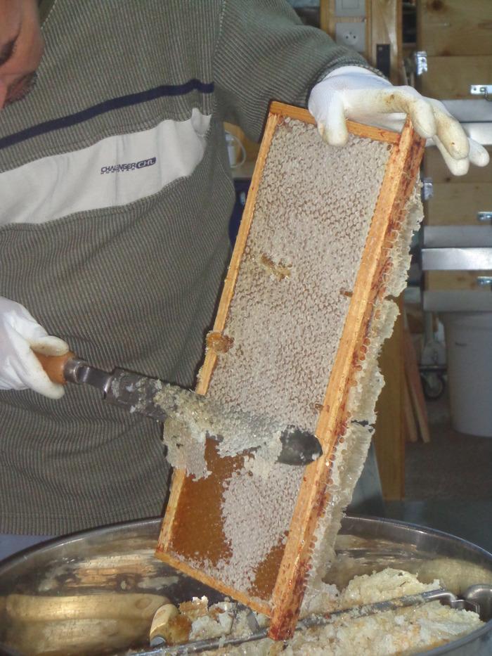 Crédits image : rucher du père Gaillot