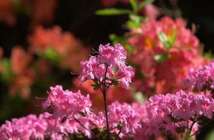 Le sens caché des fleurs