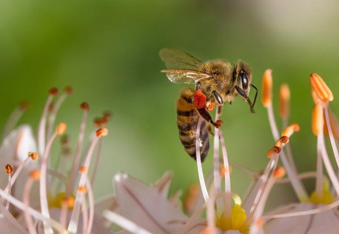 Les abeilles, la ruche pédagogiques et l'apiculteur