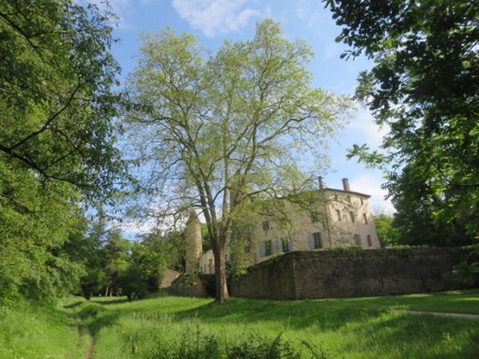Journées du patrimoine 2018 - Visite commentée «Les arbres remarquables du parc du château de Curis».