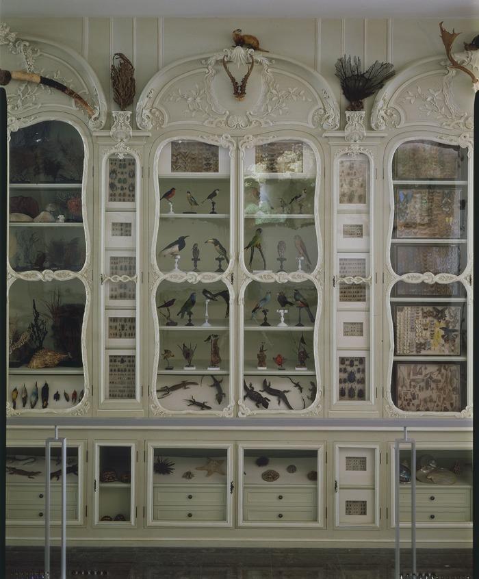 Crédits image : Photographie : Cabinet Bonnier de la Mosson, crédit : Muséum national d'histoire naturelle (Paris) - Direction des bibliothèques et de la documentation.
