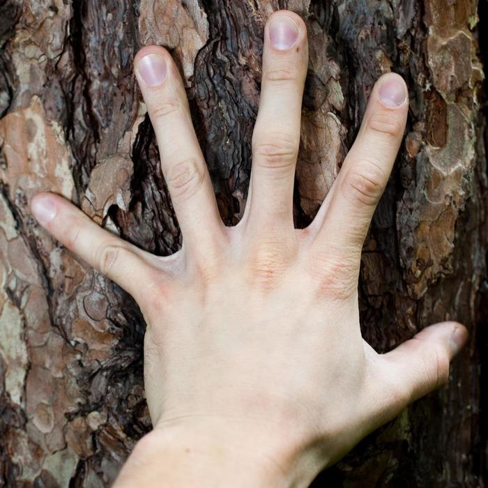 Les cinq sens: le toucher