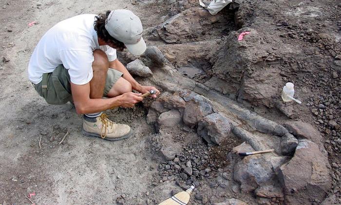 Journées du patrimoine 2017 - Les controverses de la paléontologie