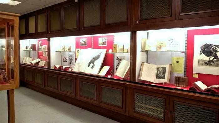 Journées du patrimoine 2018 - Les réserves de la médiathèque