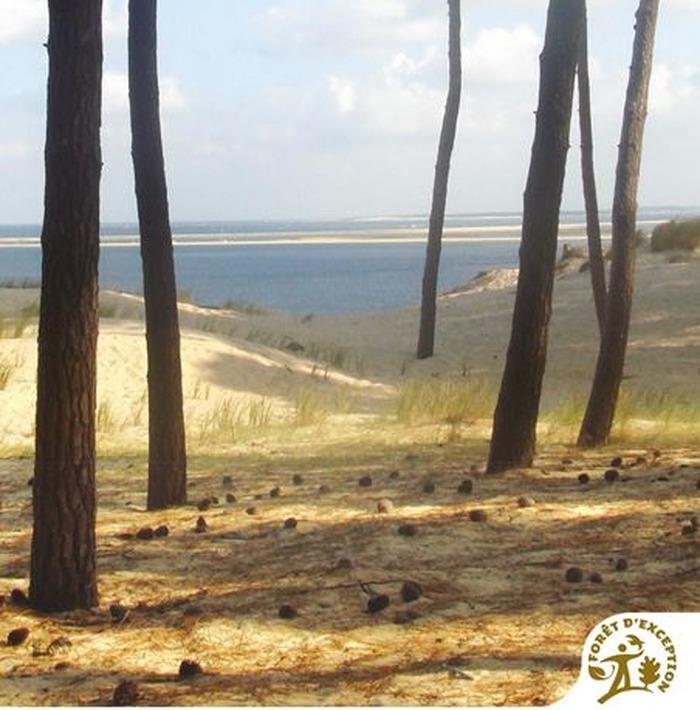 Crédits image : © Office National des Forêts