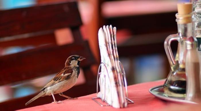 Les oiseaux du Bistrot