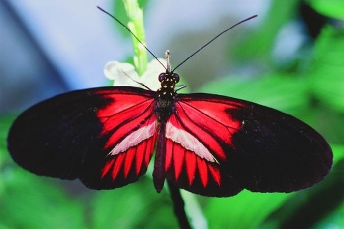 Exposition - Les papillons du monde : concept haut-garonnais