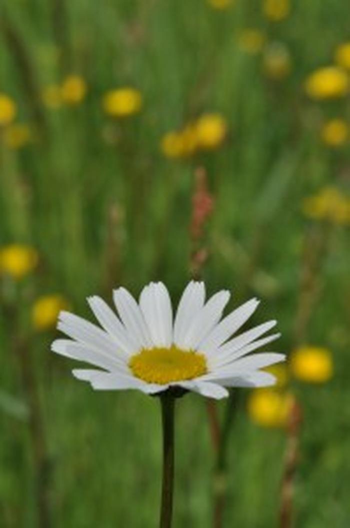 Journées du patrimoine 2018 - Les plantes comestibles au moulin de Chitré
