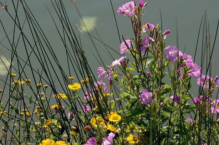 Les plantes précieuses