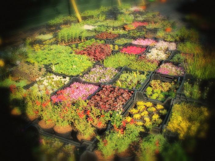 Journées du patrimoine 2018 - Les plants d'automne de la pépinière de l'Arclusaz présentés en terrasse.