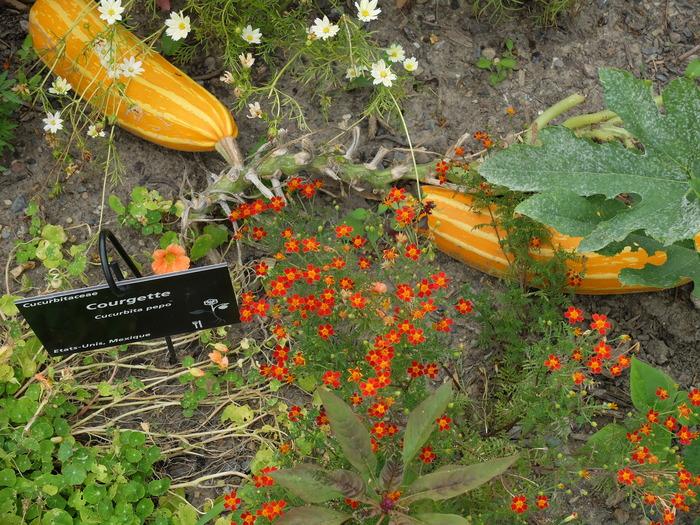 Journées du patrimoine 2017 - Les Potagers du Monde: rencontre avec un jardinier.