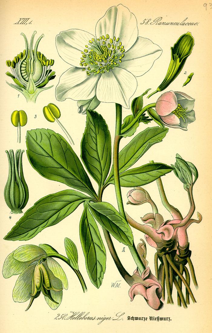 Journées du patrimoine 2018 - Livres et plantes