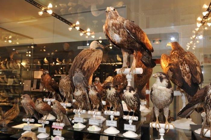 Journées du patrimoine 2018 - Musée Ornithologique Charles Payraudeau