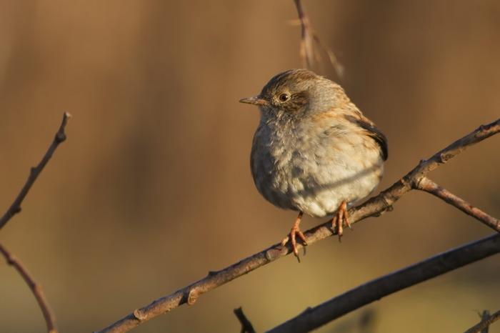 Oiseaux, joyaux de nature