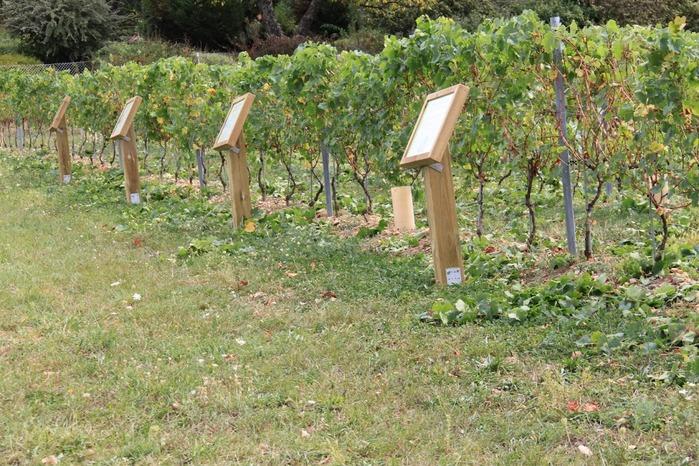 Journées du patrimoine 2017 - Parcours viticole commenté