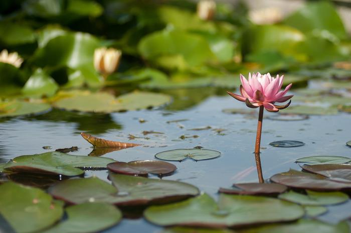 Journées du patrimoine 2018 - Circuit découverte des jardins de l'eau du Pré Curieux, un « jardin remarquable ».