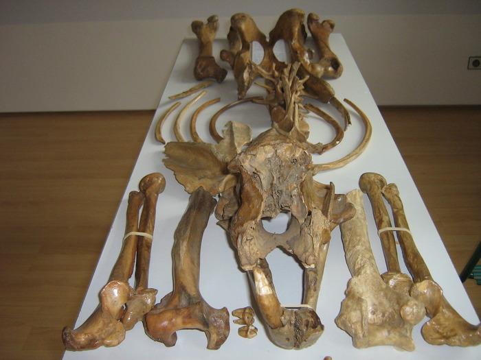 Journées du patrimoine 2018 - Conférence sur les modes alimentaires des chasseurs cueilleurs du paléolithique au néolithique ancien