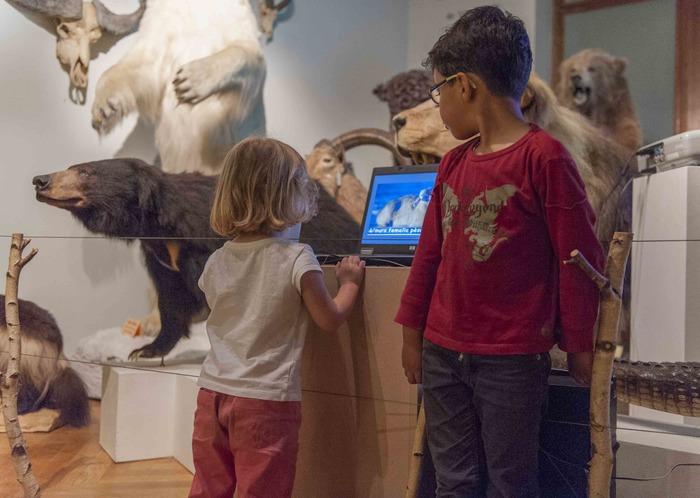 Crédits image : Musée Zoologique, photo: Klaus Stober
