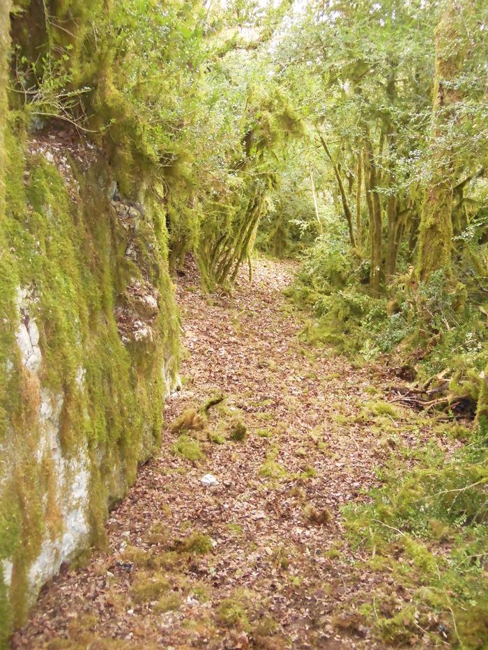 Journées du patrimoine 2018 - Petites randonnées à la découverte du site de St Symphorien