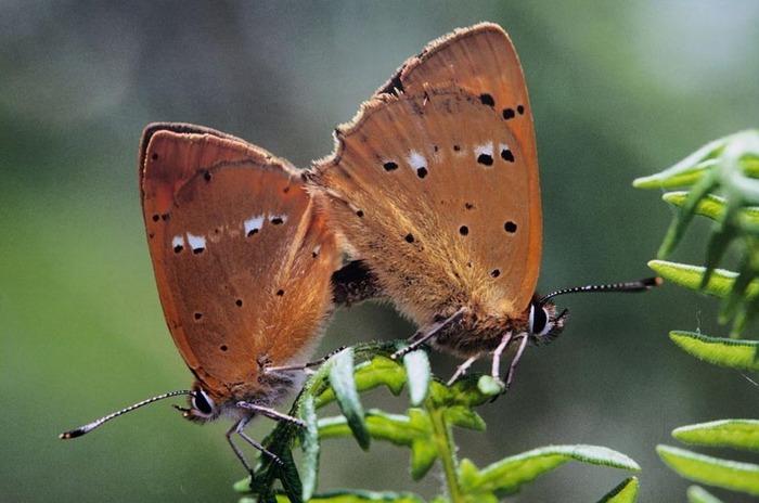 Exposition - Planète papillons