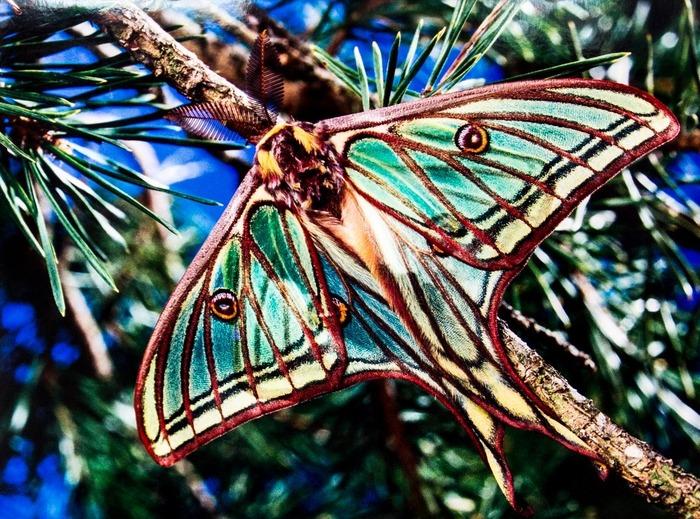 Planète papillons