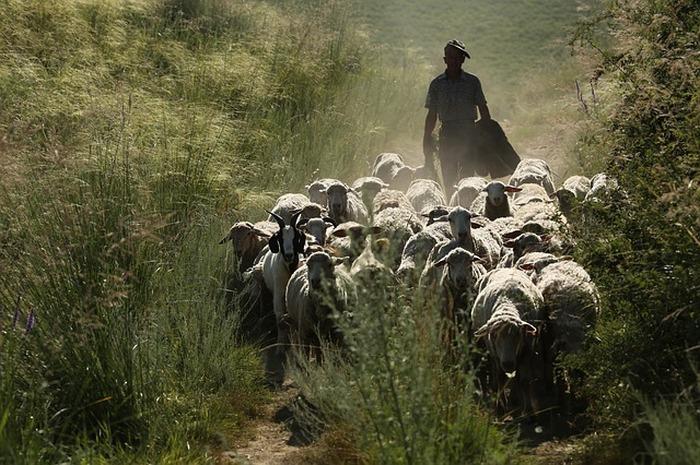 Présentation de l'élevage français