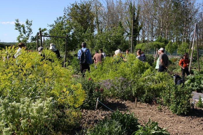 Journées du patrimoine 2018 - Présentation du patrimoine végétal