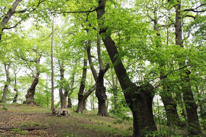 Journées du patrimoine 2017 - Rando-dégustations en forêt de Montmorency