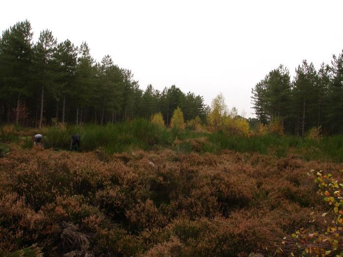 Journées du patrimoine 2018 - Randonnée-découverte des richesses naturelles de la forêt de Retz en compagnie d'un forestier