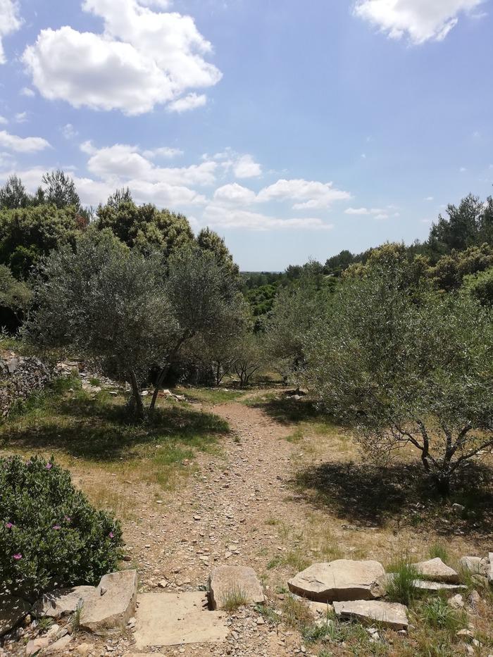 Journées du patrimoine 2018 - Circuit : Secrets des arbres de garrigue