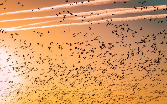 Solidarités, Migrations, Valeurs : Les migrations