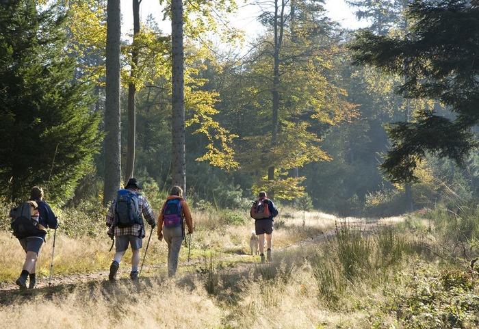 Journées du patrimoine 2018 - Forêt du Grünewald