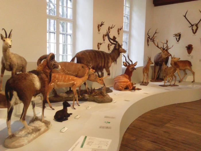 Crédits image : Salle des mammifères - Photographie : Carole Bell, Ville de Troyes