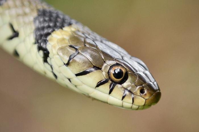Journées du patrimoine 2017 - SSSS... Les serpents du Muséum