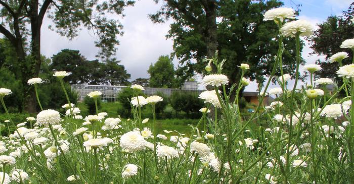 Journées du patrimoine 2018 - Table ronde au Jardin Camifolia