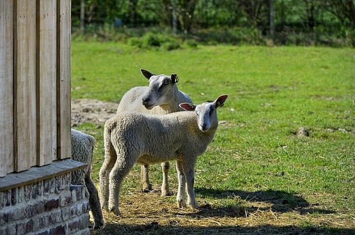 Tonds ton mouton