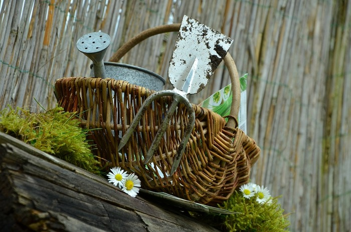 Troc plantes et outils d'automne