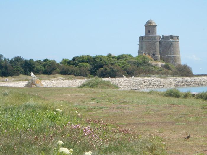 Crédits image : Île Tatihou - Conseil départemental de la Manche