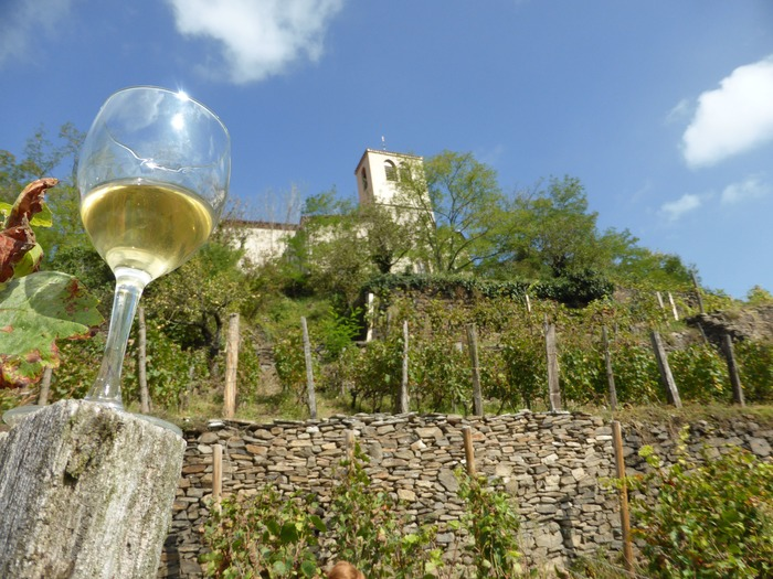 Journées du patrimoine 2018 - Vignes et vin à Dargoire et Tartaras.