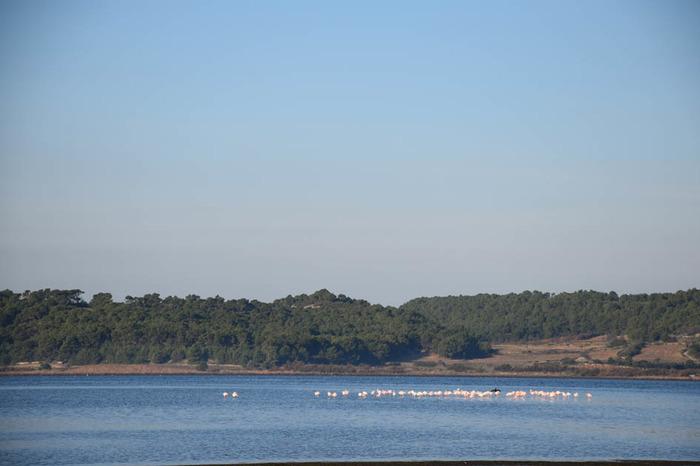 Journées du patrimoine 2018 - Visite guidée avec observation des oiseaux des étangs