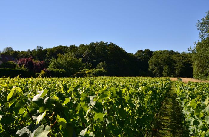Journées du patrimoine 2017 - Visite commentée de la vigne de Bussy-Saint-Georges